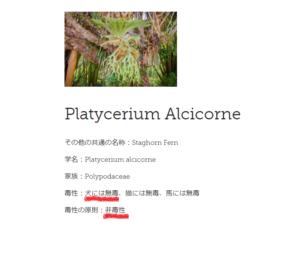 ビカクシダの英語の名前(Platycerium)をASPCAサイト内で検索!